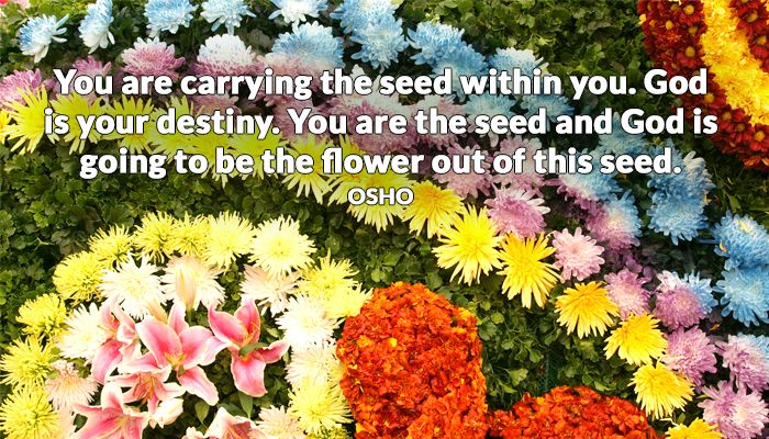 destiny flower god osho seed