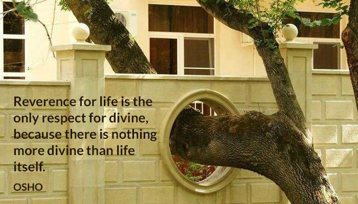 divine life osho respect reverence