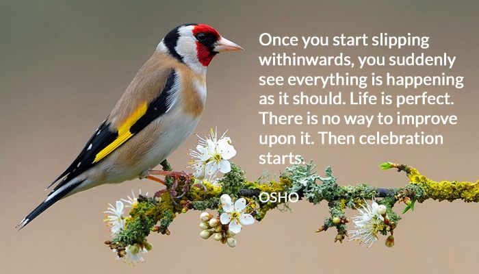 celebration improve life osho perfect within