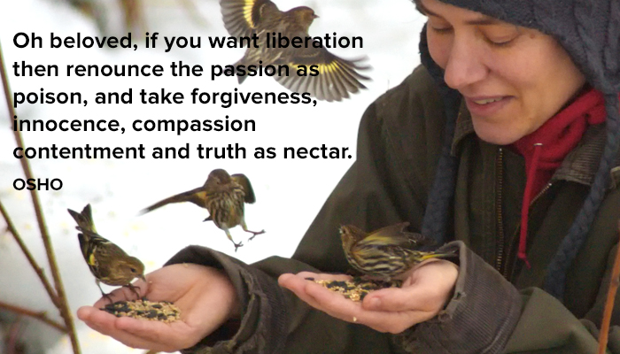 compassion contentment forgiveness innocence nectar osho passion poison renounce take truth
